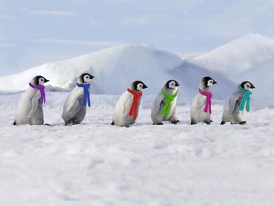 Emperor Penguins, 4 Young Ones Walking in a Line