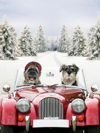 Driving Car Through a Snow Scene