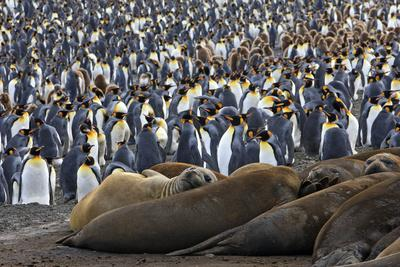 Southern Elephant Seal and Penguin Colony