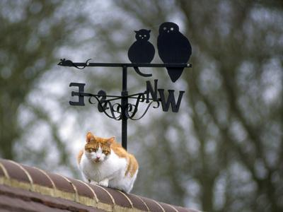 Cat on Roof with Weathervane