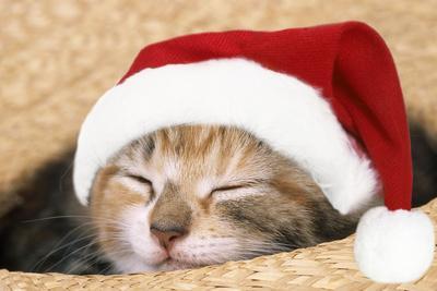 Kitten Asleep in Straw Hat