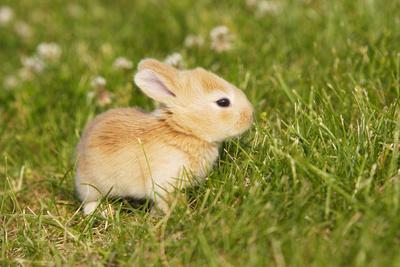 Rabbit Baby Outside