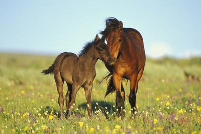 Young Adolescent Wild Horse Checks Out This Years