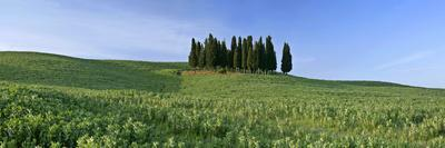 Cypress Grove Situated on Hill