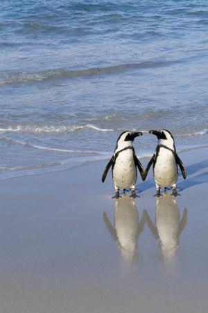 Jackass Penguin Two on Beach