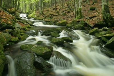 Stream in Forest with Moss Covered Rocks in Primeval