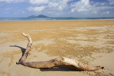 Beach and Dunk Island, Dead Tree Branch Stranded