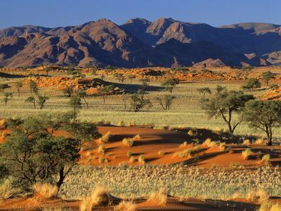 Namib Rand View over Red Dunes and Savanna
