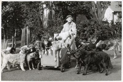 Elderly Woman with Large Number of Dogs