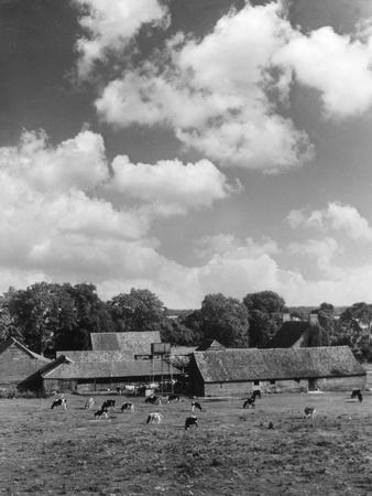 Norfolk Farm