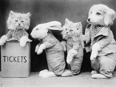 Animal Ticket Queue