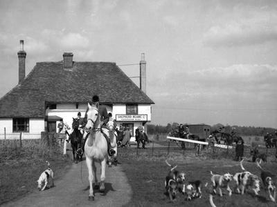 The Tickham Foxhounds