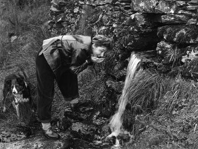 Drinking from a Stream