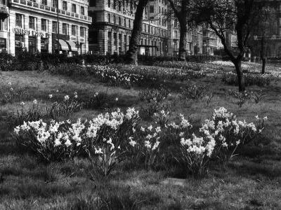 Springtime in Green Park