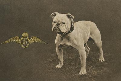 Rfc WW1 Bulldog Postcard