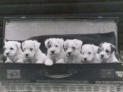 Six Puppies