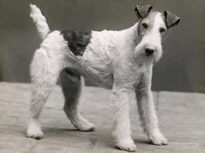 An Unidentified Dog