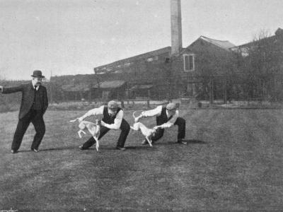 Two Owners Demonstrate How Whippets are Started in a Race : This Is known as 'Flapping'