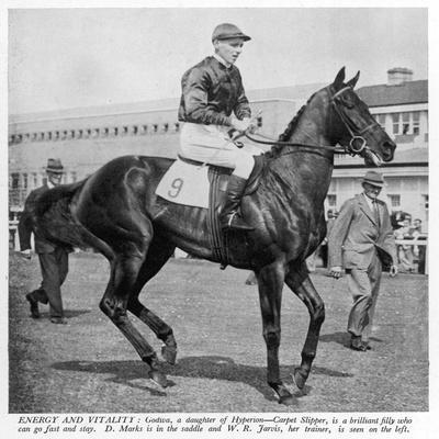 The Racehorse Godiva in 1940