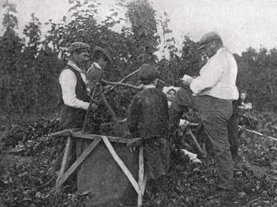 Family Working in Hop Fields, Kent