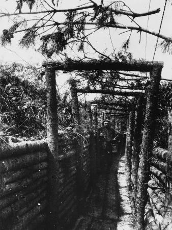 Camouflaged Communication Trench Near Hill 60 in the Ypres Sector During World War I