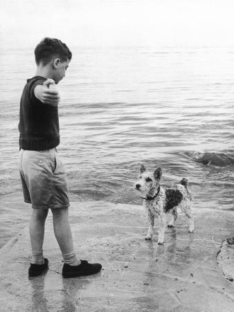 A Boy Throws Stones into the Sea for His Dog to Retrieve: the Dog Looks Up Expectantly
