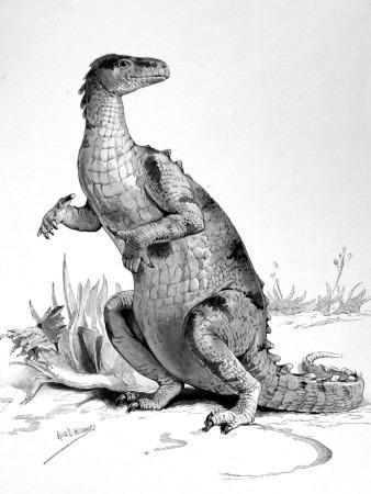 Restored Figure of the Iguanodon