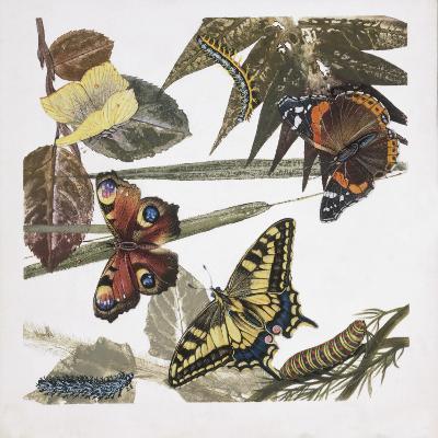 Butterflies and Larva, Illustration