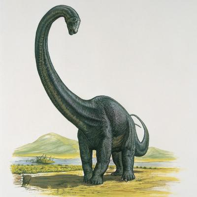 Diplodocus Dinosaur Standing Near a River