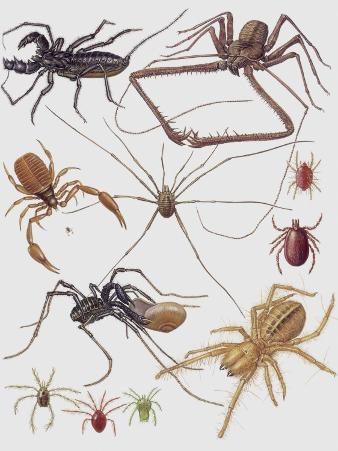 Close-Up of a Group of Arachnida Insects