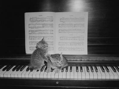 Two Kittens Sitting on Piano Keyboard By Sheet Music