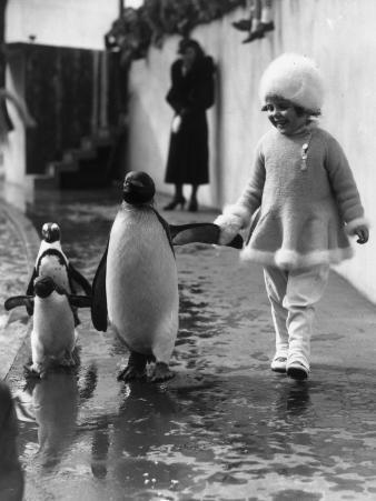 Penguin and Friend