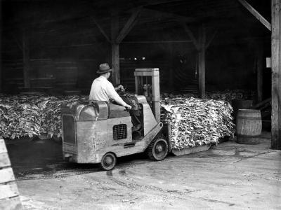 Man Driving Forklift