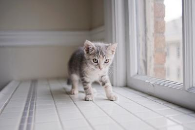 Kitten by Window