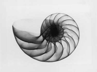 X-Ray Nautilus Shell