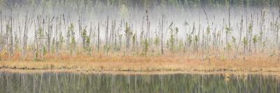 Canada, British Columbia, Mount Robson Provincial Park, Wetlands in Fog