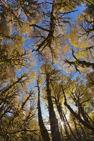 Usa, Washington State, Olympic National Park, Quinault River, Low Angle View of Trees in a Forest