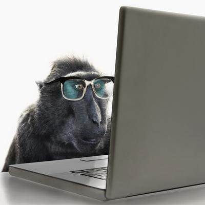Monkey Wearing Spectacles Using Laptop Computer