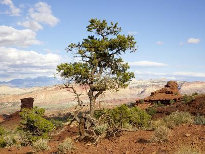Twisted Tree in Southwest Desert Landscape