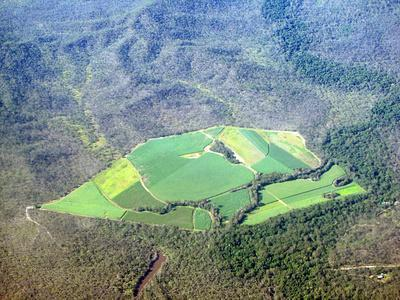 Sugar Canefields Carved out of Forest