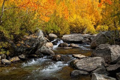 Fall Colors along the South Fork of Bishop Creek, California, Usa, October 2010