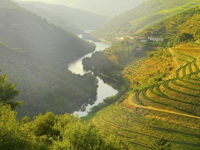 Portugal, Douro, Terraced Vineyards