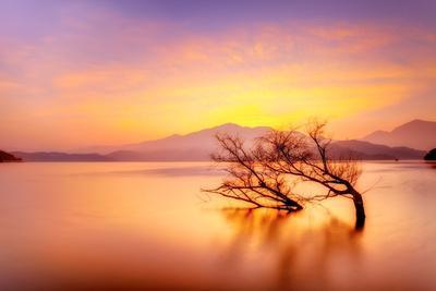Colourful Lake with Single Tree