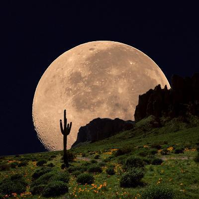 Coyote Moon Southwestern Cactus Mountain