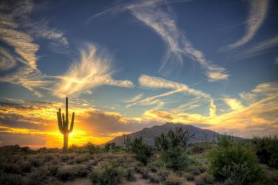 Saguaro Sol