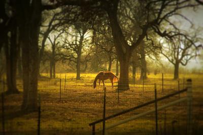 Horse in Morning Sun Eating Grass