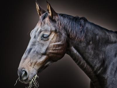 Just a Horse