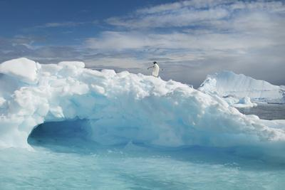 An Adelie Penguin on Top of an Iceberg in the Antarctic Seas.