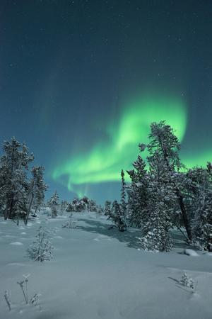 Snow Covered Trees with Moonlight and Aurora
