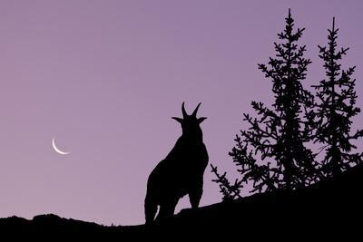 Canada, Alberta, Elbow-Sheep Wildland Provincial Park, Highwood Pass, Mount Lipsett, Silhouette of